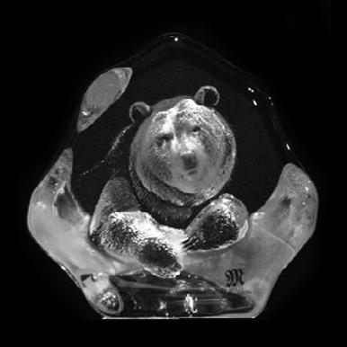 Wildlife Brunbjörnsunge