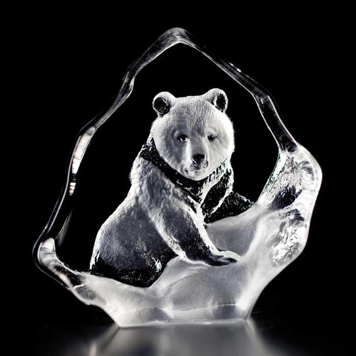 Wildlife Brun björn