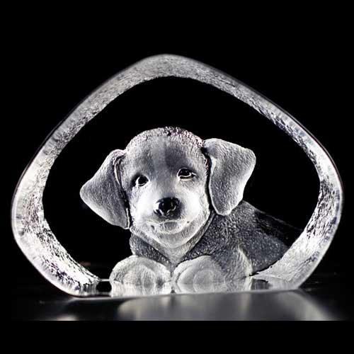 Wildlife Hund