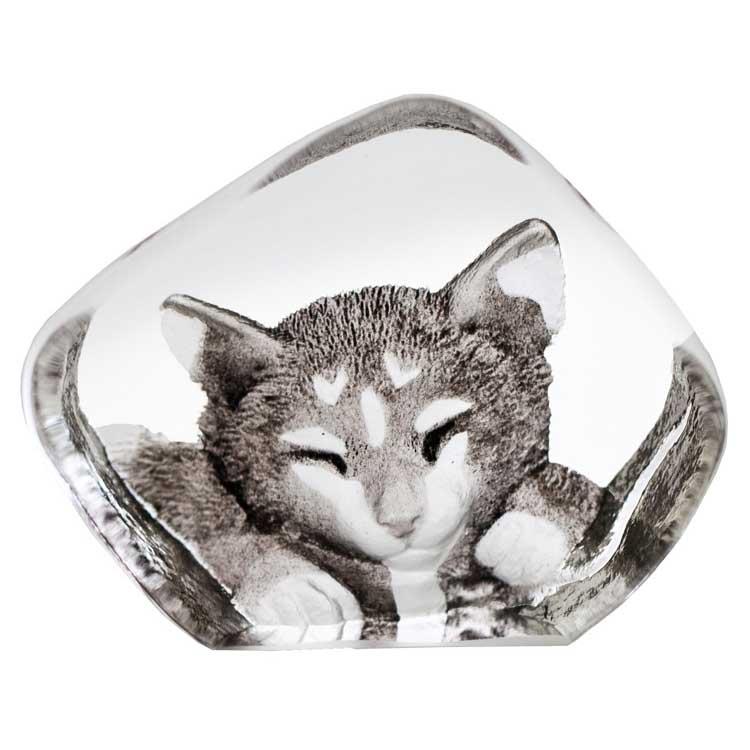 Safari Miniatyr Katt