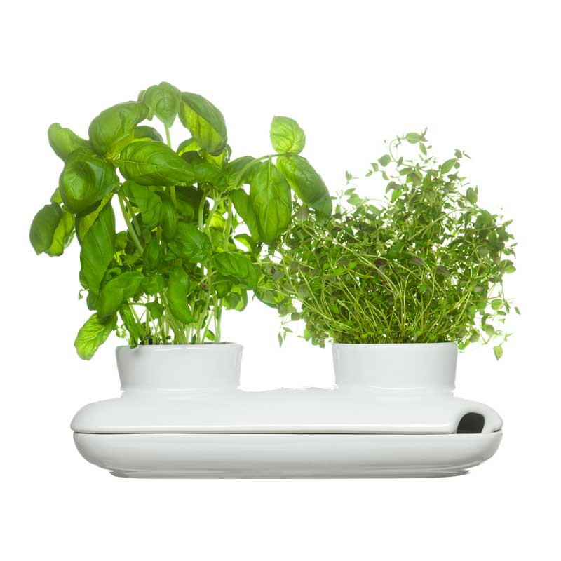 Herbs/Spices Duo Örtkruka